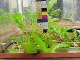 Rostliny ve skleníku Orangery (06.2000)