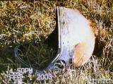 Mezi nalezenými troskami byla i přilba jednoho z členů posádky STS-107 (01.02.2003)