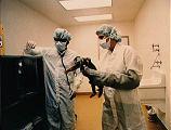 Jedna ze dvou opic vybraných pro Spacelab 3 (28.04.1985)
